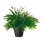 برگ سبز ایکیا FEJKA